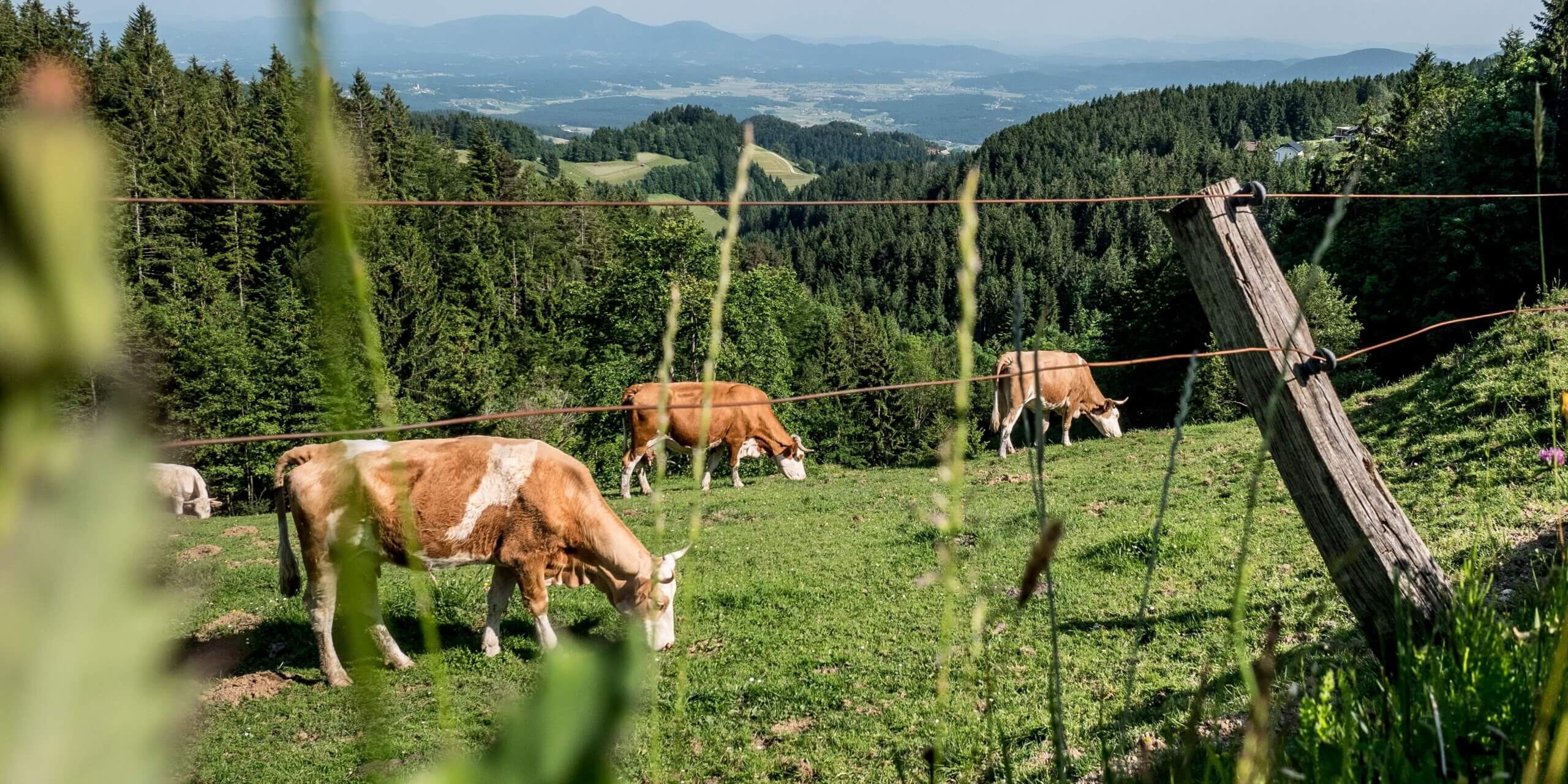 better cow rfid tracking solution